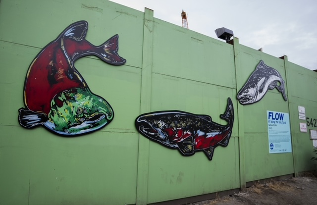 Dofzy's artwork showcasing three different species of salmon (Sockeye, Chinook, and Coho) are hung on a green wall constrasting with the bright reds and dark hues of the salmon.